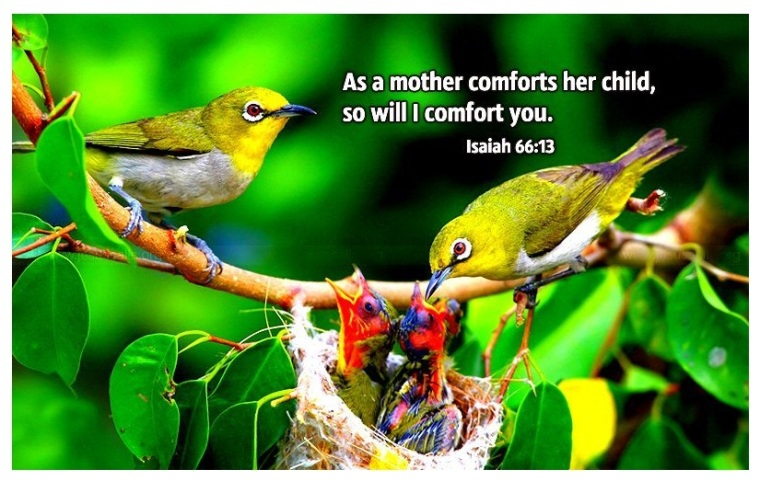 mother-comforts